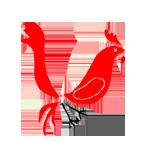 bird_150