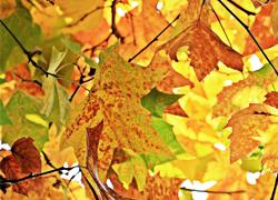 秋の体験レッスン|ヴァイオリン・ピアノ